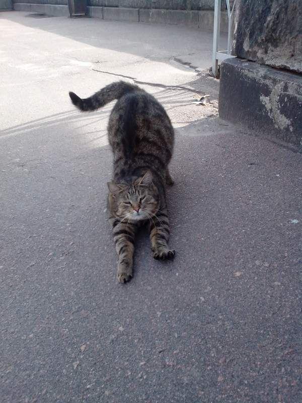 Кот выгнулся
